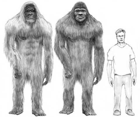 Bigfoot drawings.